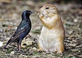 عجائب وغرائب الحيوانات ، عجائب وغرائب الطبيعه ، عجائب وغرائب مملكه الحيوان