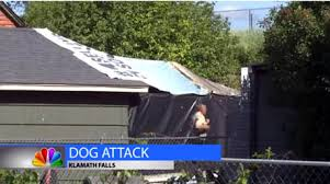 bluetick coonhound oregon four legged friends and enemies oregon 10 mauled by