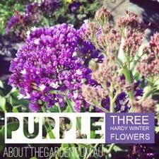 winter flower planting guide australia for more http www