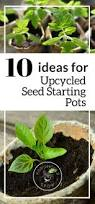 65 best seed starting tips images on pinterest seed starting