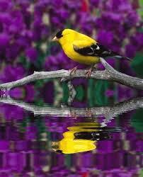 Les oiseaux : la passion de Marylou - Page 3 Images?q=tbn:ANd9GcSQ1Vk5VYFZ10Yns2D7FwqvycEAKmFRuhvHmNydSpVppEv7Ip0WkYoHC57s