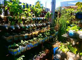 Vertical Garden Vegetables by Vegetable Container Gardening The Gardening Container Vegetable