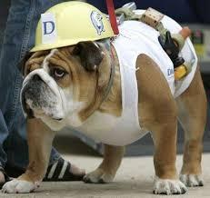 Dog Costumes Halloween 59 Diy Dog Costume Ideas 2017 Images Costume
