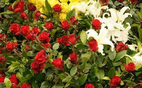 வால்பேப்பர்கள் ( flowers wallpapers ) 01 - Page 20 Images?q=tbn:ANd9GcSSLWbDHsmEgO_cNSP4e2e7SjA-HhtHn6aYwxM2h9_70nxXQowVOw