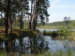Lower Polissia National Nature Park