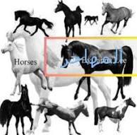 تاريخ الحصان العربي في العالم Images?q=tbn:ANd9GcSTPEkEpmKAzZL09aiauEh6HzBYDR8xmDJGccvFZgkYAHfSN8BT28eimp8s7g