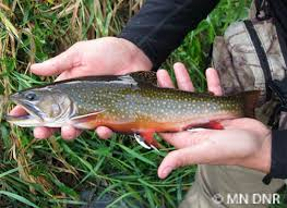 fly fishing minnesota dnr