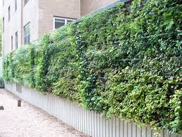 Outdoor Wall Planters by The Ultimate Guide To Living Green Walls Ambius