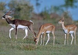 Deer Park, Hisar