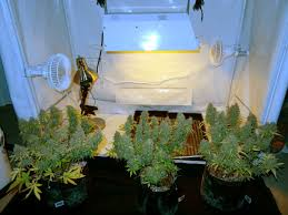 how long does it take to grow weed indoors grow weed easy