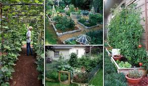 22 ways for growing a successful vegetable garden amazing diy