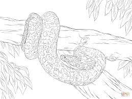 anaconda coloring page yellow anaconda coloring page free
