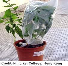 Bitkilerde boşaltım nasıl olur