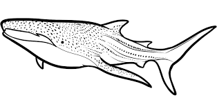 cool shark coloring pages free 79 5994