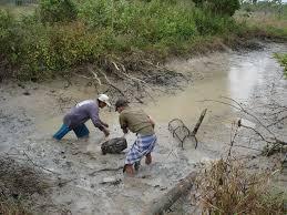 การจับปลาของชาวอิสาน.......กระบวนการหาอยู่หากินที่ บ่ เอาปรียบแม่โพสพ