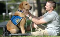 Research with Service Dogs   Evolutionary Anthropology Photo Credit  CCI