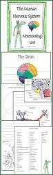 Bill Nye Digestion Worksheet Best 25 Body Action System Ideas On Pinterest Systems Of Human