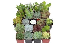 Succulents Pots For Sale by Amazon Com Shop Succulents Unique Succulent Collection Of 20