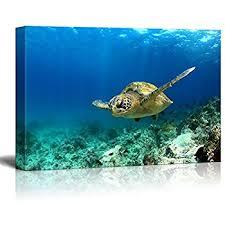 Sea Turtle Home Decor Amazon Com 3 Piece Blue Wall Art Painting Turtle Looking Swim In