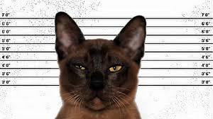 Hierba gatera: droga para los gatos