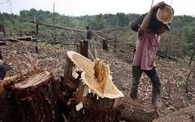 BAAHDUODU SAYS: STOP ILLEGAL LOGGING