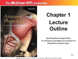 Anatomy And Physiology Chapter 1 Review Answers Chapter 1 Major Themes Of Anatomy U0026 Physiology Ppt Video Online