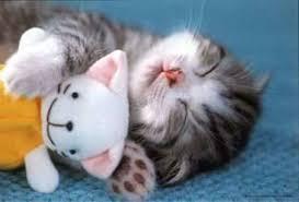 Jom Pelihara Kucing!!