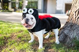 everything she wants halloween costumes for your pet from