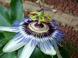صورة لنبات ياكل ضفدع images?q=tbn:ANd9GcS