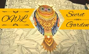 secret garden coloring book owl jardim secreto