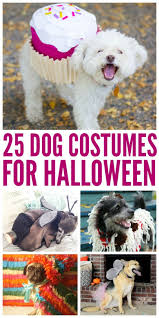 best 25 pet costumes for dogs ideas on pinterest halloween