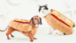 halloween city long island ny halloween costumes for pets newsday