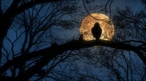 scary moon background scary creepy crow or raven sitting on tree branch during a full