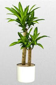 Combattere l'inquinamento domestico con le piante Images?q=tbn:ANd9GcSa1nrKfc_-06hpO7U-wP3BfExqNI3qwMYIYK7W5AeK8ZBo0GQG5g