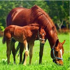 تاريخ الحصان العربي في العالم Images?q=tbn:ANd9GcSagCslazJnYu6yH64-fVaL-sxKvd0g1dujOi_VytporGvNotLU-Q