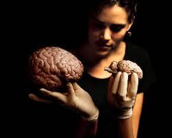 Sheep Brain Anatomy Game Sheep Brain Dissection The Anatomy Of Memory Exploratorium
