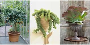 15 best indoor plants cool indoor gardening ideas
