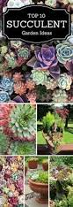 garden rockery ideas best 25 succulent rock garden ideas on pinterest succulents