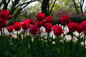 الورود تقوي الذاكرة Images?q=tbn:ANd9GcScfhKJRZ1S4hNsJmt5nguD3AZ9Cinjj1utV0x6z81nu1uviIJszA