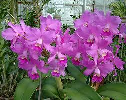 botanical gardens offer orchid sale winter tour university city