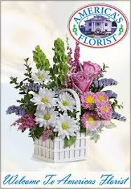 Flowers Cape Town Delivery - the 25 best flower delivery service ideas on pinterest kiki cat