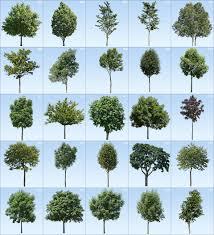 pro viz 3d tree textures xtreme 2