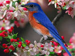Beautiful Bird Wallpaper 1024