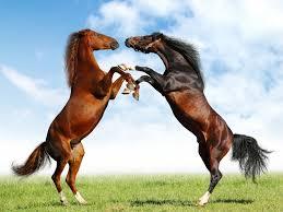Konji - Page 2 Images?q=tbn:ANd9GcSfodV1cUvaVYR_pFEtSzw69BljXCGcw6FbOQrDU9zZDMmfIeCyqA