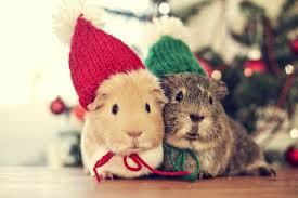 cute christmas pet photos the christmas cart