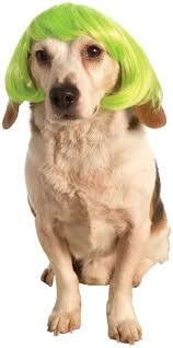 green halloween wig 82 best happy howl o ween images on pinterest pet costumes