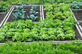 shade vegetable garden gardening ideas