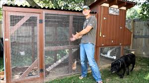 backyard chickens for sale backyard chickens is it really worth it youtube