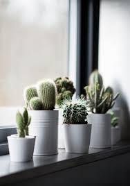 40 ideas para jardines de cocina con plantas suculentas cacti