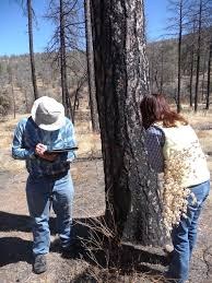 New Mexico Wildfire Map by Wildfire Maps In The Hands Of Landowners Could Be A Management